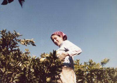 Picking oranges on Kvutzat Schiller, where I spent my first year in Israel.